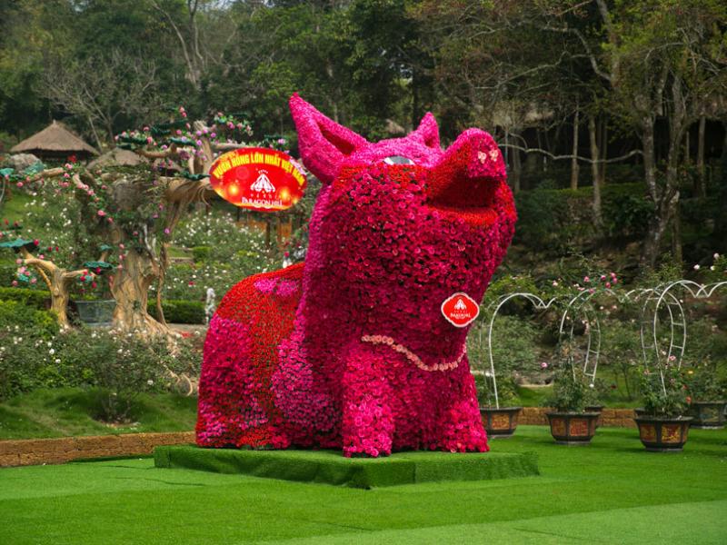 Trao kỷ lục cho chú lợn kết bằng hoa hồng cao hơn 4m